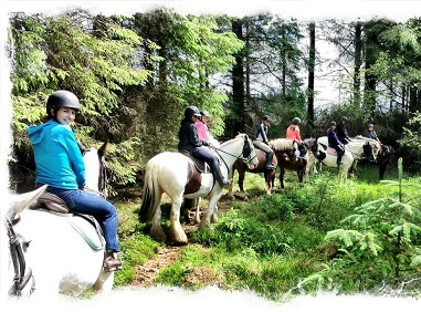 Horse Riding Dublin Guided